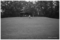 丘を登る - BobのCamera
