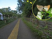 ミドリヒョウモンの交尾 - 秩父の蝶
