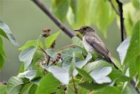 雨上がりの森へ - 鳥と共に日々是好日