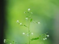 赤城自然園夏の花たち2 - 光の音色を聞きながら Ⅳ
