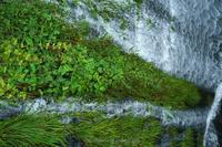 Aquatic plants - デジタルで見ていた風景