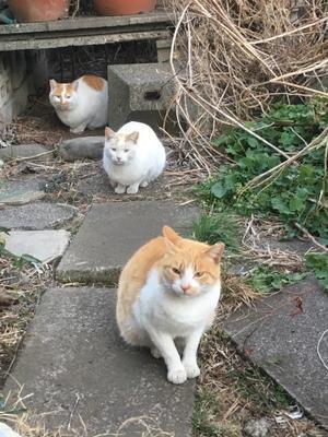 お世話する人を失う地域猫たち。 - 飼い主のいない猫たち
