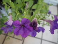 9月の庭寄せ植えvol.2 - グリママの花日記