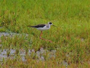 秋 台風 渡り鳥 - あたび~のひとりごと