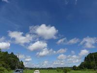 大きな積雲ハンミョウにも会いました。 - 千葉県いすみ環境と文化のさとセンター