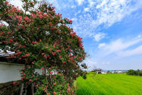 石光寺の百日紅 - 花景色-K.W.C. PhotoBlog