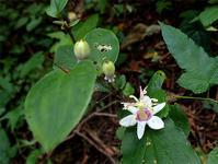 9月6日の三瓶山① - 清治の花便り