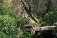 ゆれるドンゴロス - 動物園へ行こう