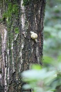カタツムリが木に居る。 - 平凡な日々の中で