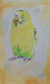 あくびちゃん - 水色堂 ~Blue & Yellow Budgie~