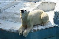 2019年8月天王寺動物園2その3 - ハープの徒然草