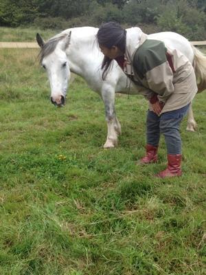 馬と初めての対話 - イギリス ウェールズの自然なくらし