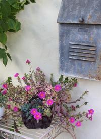 タコ科タコ属のお花&ポーチュラカ - ペコリの庭 *