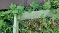グリーンカーテン取り外し - うちの庭の備忘録 green's garden