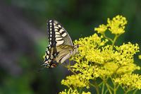 九州弾丸の旅(2019/09/06) - Sky Palace -butterfly garden- II