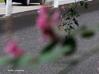 萩の道 - HAIKU/autumn PHOTO