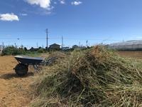 雑草の山 - 週末農夫コーディーのイケてる鍬の振るい方