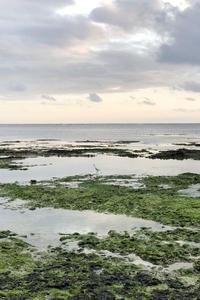 黒島のお料理を学ぶ - natural essence : EKO PROJECT