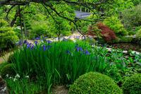 実光院の春の花々 - 花景色-K.W.C. PhotoBlog