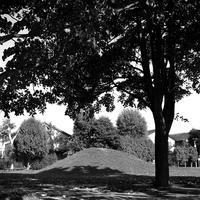 二眼レフで撮る巨木とマウンド - 照片画廊