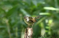 近くの公園へ - 鳥撮りDAIRY