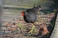 空振りだった一日(千里南公園、服部緑地) - 週末バーダーのBirding記録