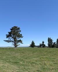 鈍った体を鍛えなおす 春の訪れとシーズンスタート - みつばちとニュージーランドで暮らす PicoMiere