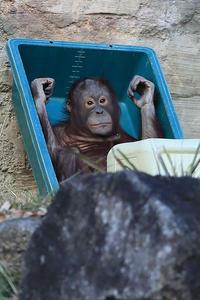 9月10日(火)勤勉 - ほのぼの動物写真日記