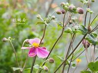 深秋 - HAIKU/autumn PHOTO