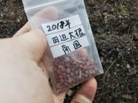 夕方5時に畑に!・・・人参、大根の種蒔き - 化学物質過敏症・風のたより2