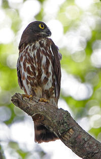 プロフィール。 - 季節の野鳥~Wildbirds archives