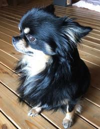 シュンちゃん飼い主を選ぶ - 神戸ポタリング日記