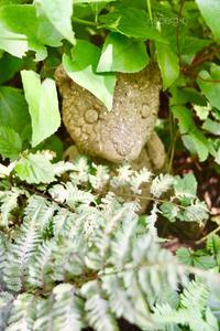 ユーフォルビア・アスコットレインボー - 小さな庭 2