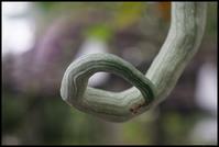 向島 -49 - Camellia-shige Gallery 2