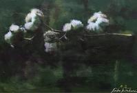 Cotton※258 - およぐ、ジュゴン!