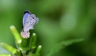 蔵出し - 紀州里山の蝶たち