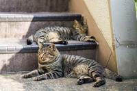 猫認識 - - 光景彡z工房 - ◇ SeasonII ◇