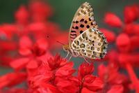 蝶と山野草など散歩道でいろいろ - 子猫の迷い道Ⅱ