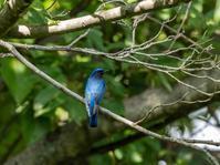 久しぶりの鳥撮り - 下手の横好き