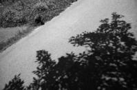 木陰で一休み - のっとこ