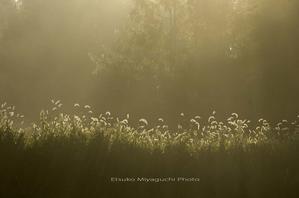 エノコログサの季節 - ekkoの --- four seasons --- 北海道