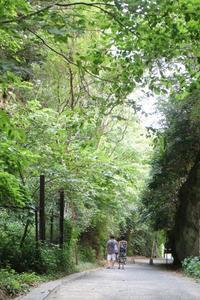 鎌倉亀ヶ谷坂切通し夏から秋へ - 木洩れ日 青葉 photo散歩