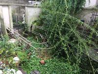 台風到来!庭倒壊。 - Mayumin's rose garden&table 小さな秘密の花園で