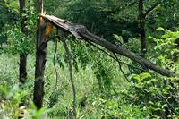 ■樹々の枝が折れた19.9.10 - 舞岡公園の自然2