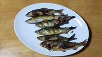 赤川のアユ - 「 ボ ♪ ボ ♪ 僕らは釣れない中年団 ♪ 」Ver.1