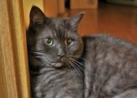 ホロ兄さんのカッコいい写真 - ぎんネコ☆はうす