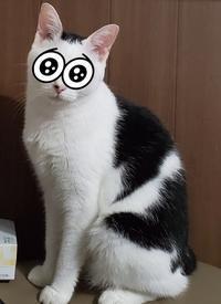 モス - 素人木工雑貨と犬猫日記