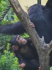 仲良し兄弟[京都市降動物園] - a diary of primates