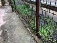 葉っぱと雑草に悩まされるお得セットと、焼き鳥の日。 - SANUKI-LOKO'S STYLE
