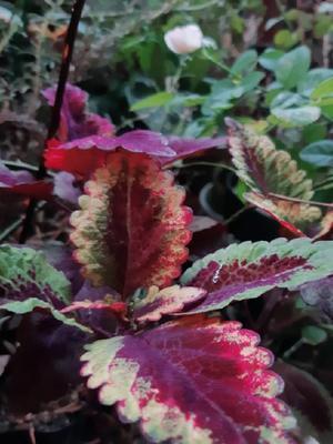 秋ですねぇ - 花暮らしの記